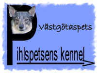 Pihlspetsens kennel